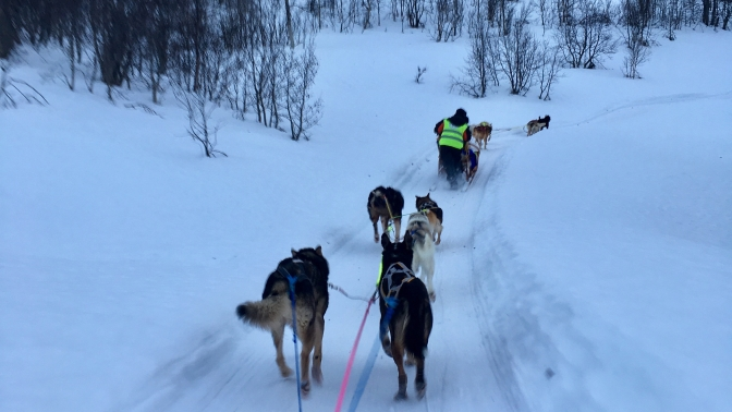 Husky sledding in Tromso:  becoming a musher
