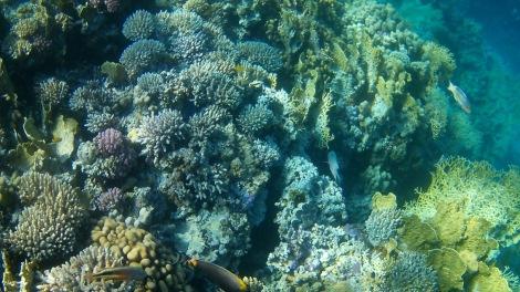 Paradise island, Hurghada, Egypt