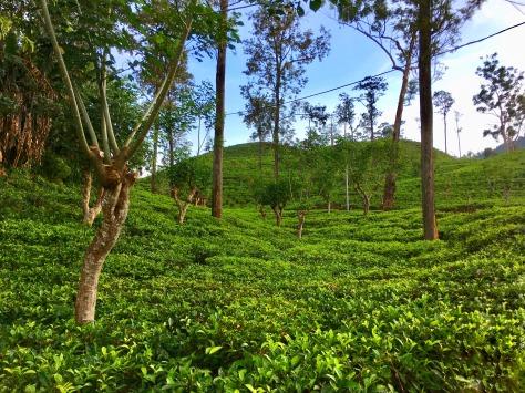 Ella, Sri Lanka, beautiful places