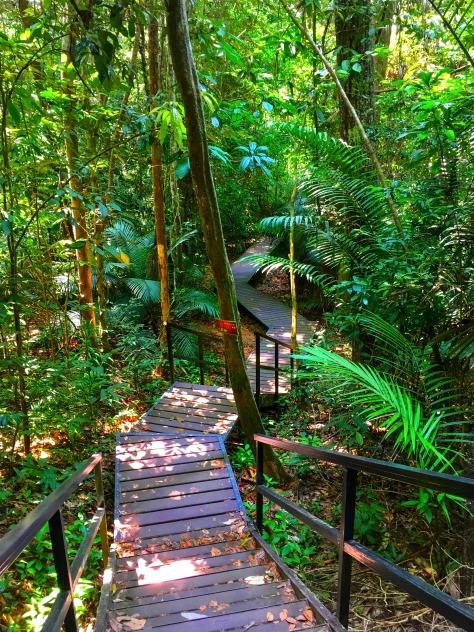 Taman Negara jungle, Malaysia