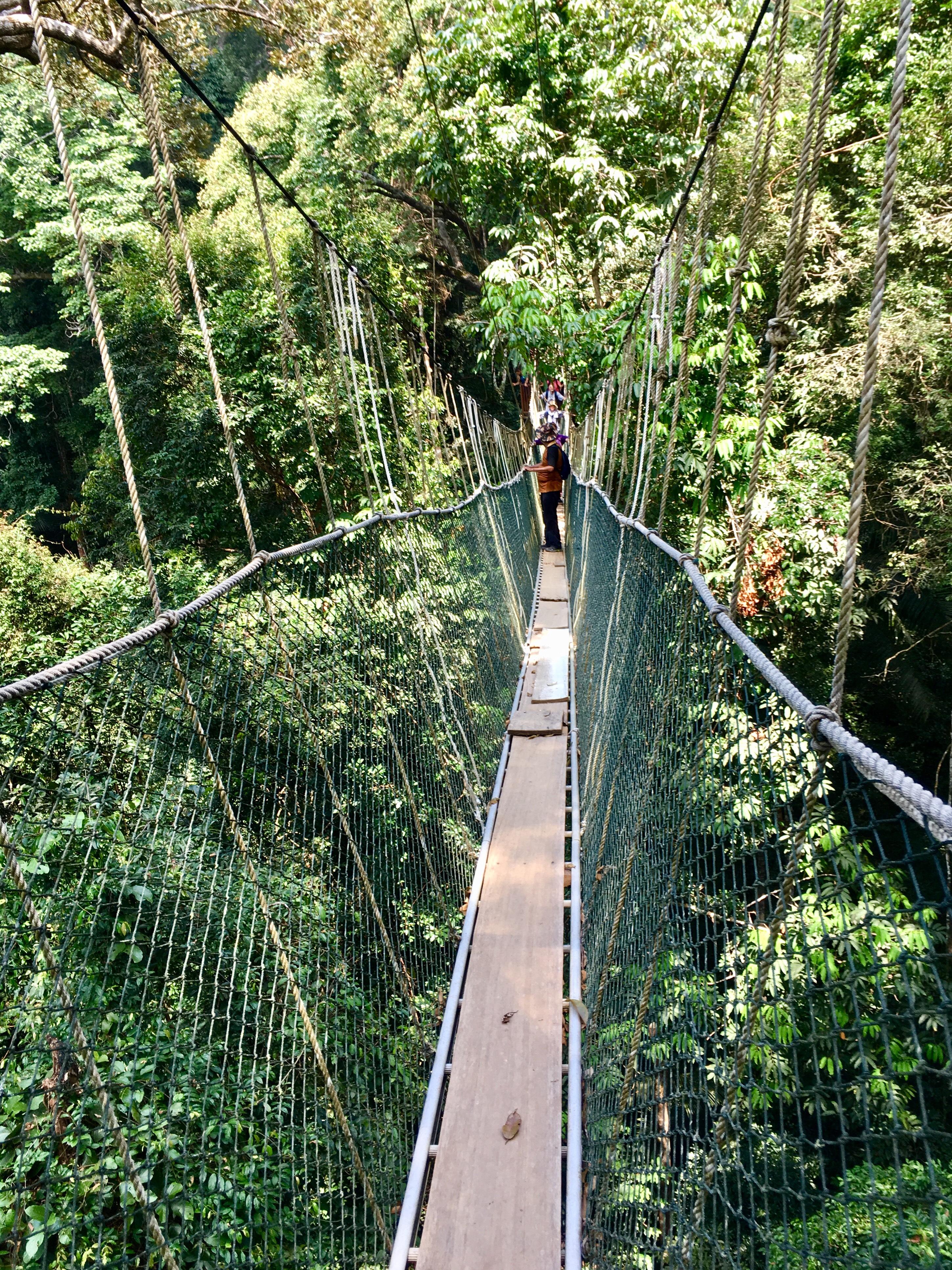 Taman Negara jungle, Malaysia, canopy walk