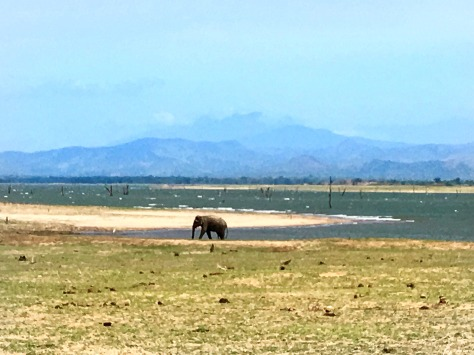Sri Lanka, safari in Udawalawe, beautiful places