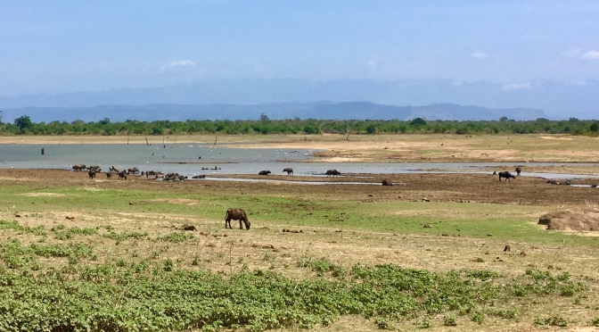 Sri Lanka: safari & wildlife in Udawalawe