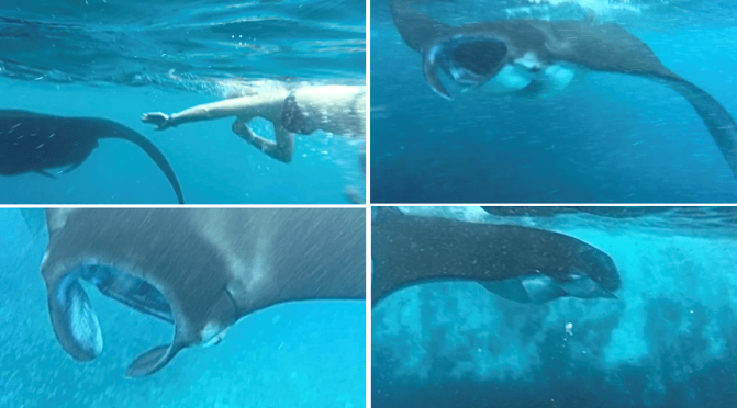 Bali, Nusa Penida, swimming with manta rays