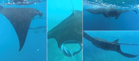 Swimming with manta rays in Nusa Penida, Bali, Indonesia