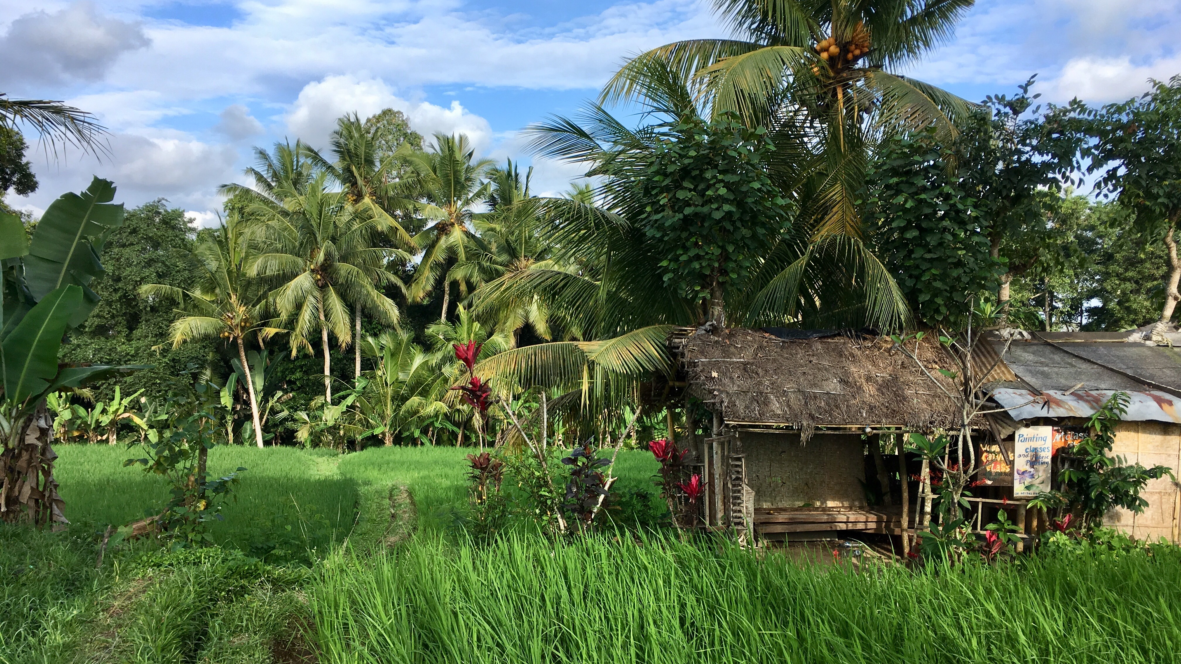 Ubud, Bali, rice paddies