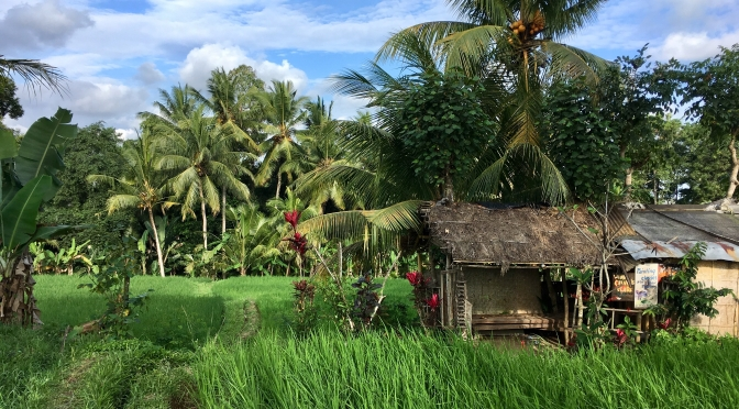Bali – the OMG of Ubud