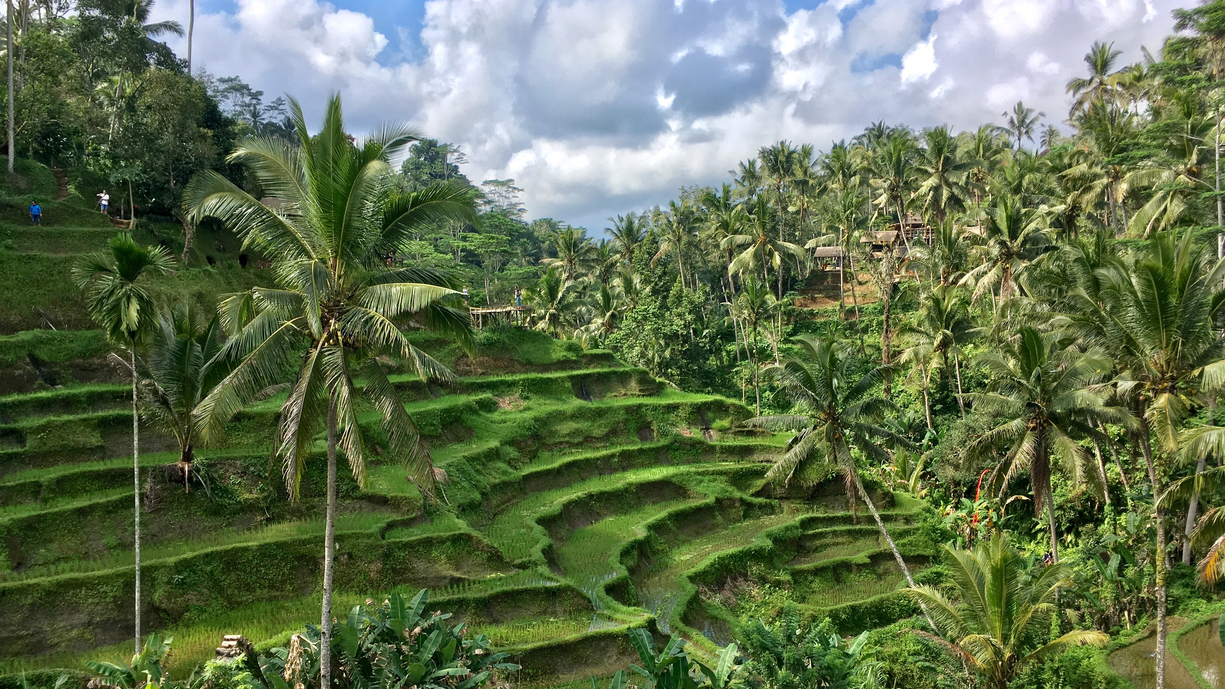 Tegalalang Rice Terrace, Ubud, Bali, Indonesia