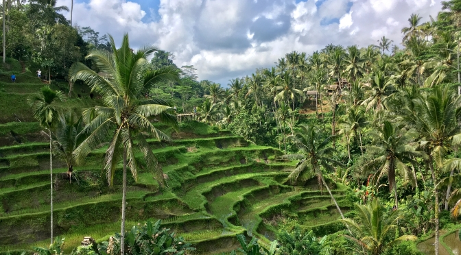 Bali: Best one day tour close to Ubud