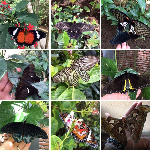 Butterflies in Bali, Butterfly Park