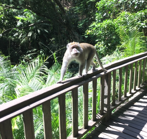 Monkey Forest Ubud, Bali, wildlife