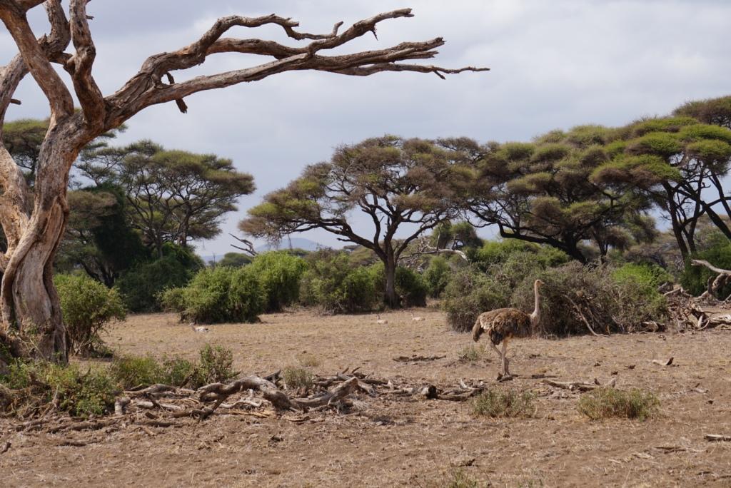 Maasai Mara, Kenya safari