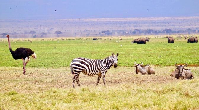 Kenya: safari in maasai mara (1)