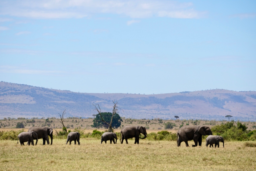 Kenya, Maasai Mara, The Great Migration, Serengeti, wildlife