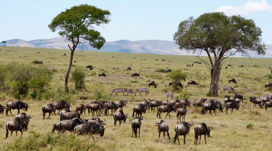 Kenya, Maasai Mara, The Great Migration, Serengeti