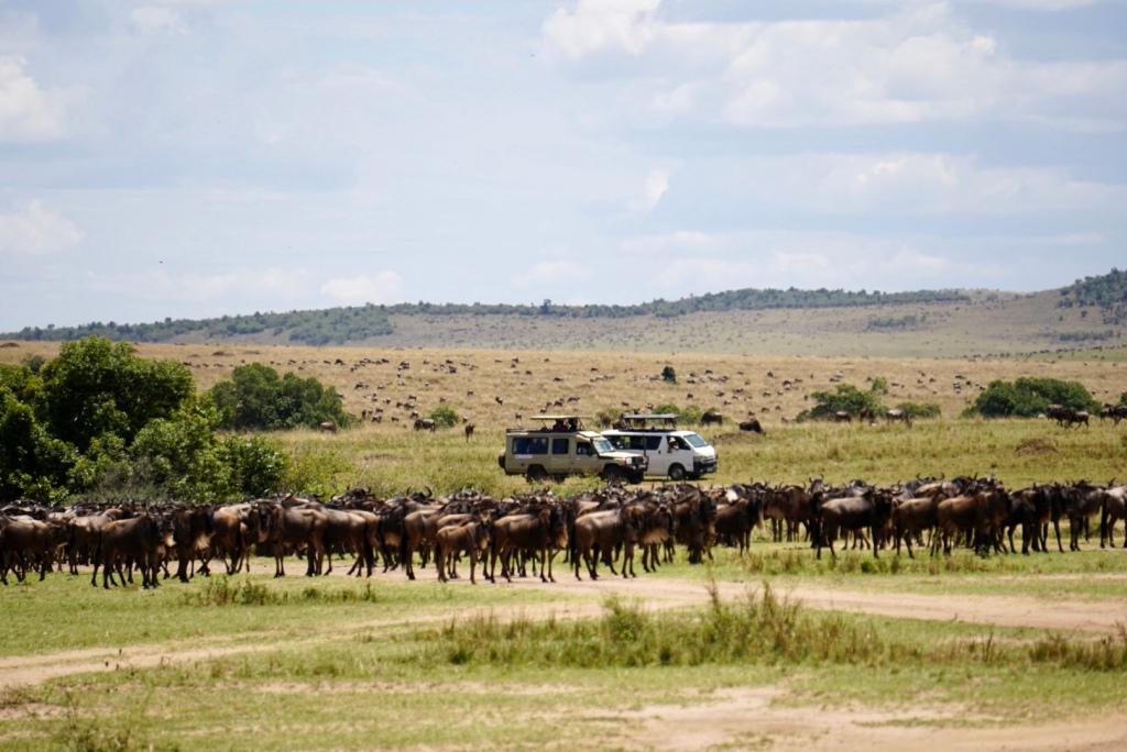 Kenya, Maasai Mara, The Great Migration, Serengeti, wildlife
